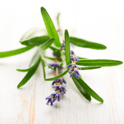 5 Everyday Essential Oils for Beginners