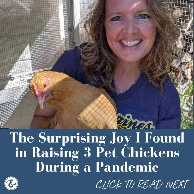 the surprising joy i found in raising 3 pet chickens during a pandemic