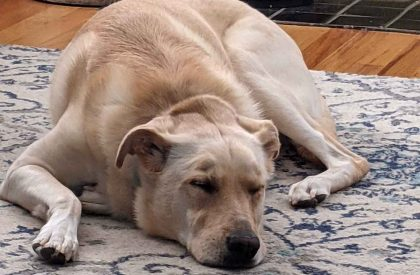 grieving our dog revealed the power of family love